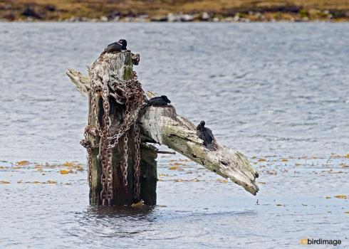 03112016_day 5_Falklands_Stanley_1
