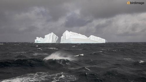 12112016_day 15_to Antarctica_18
