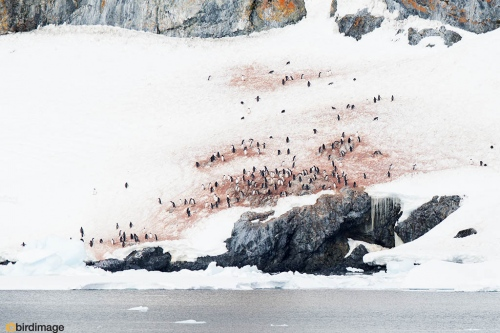 14112016_day 16_Antarctica_26