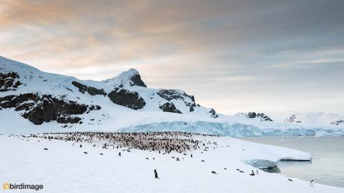 14112016_day 16_Antarctica_46