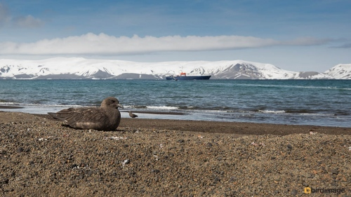 15112016_day 17_Antarctica__Deception Island 7
