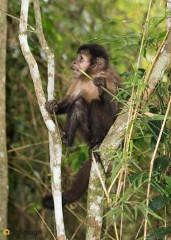 21112016_Iguazu day 2_4