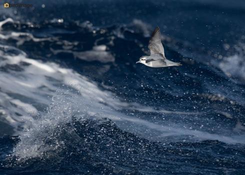 04112016_day 6_ on schip Falklands South Giorgia 7