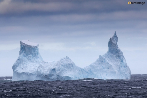 12112016_day 14_to Antarctica_3