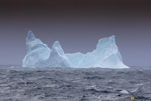 12112016_day 14_to Antarctica_4