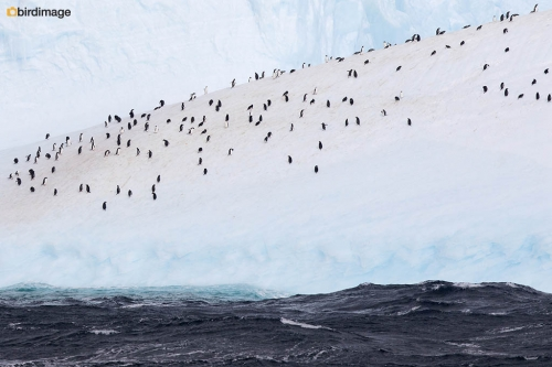 12112016_day 15_to Antarctica_11