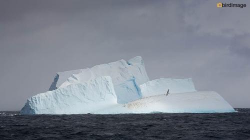 12112016_day 15_to Antarctica_16