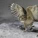 Blakistons visuil -Blakiston's fish owl 04