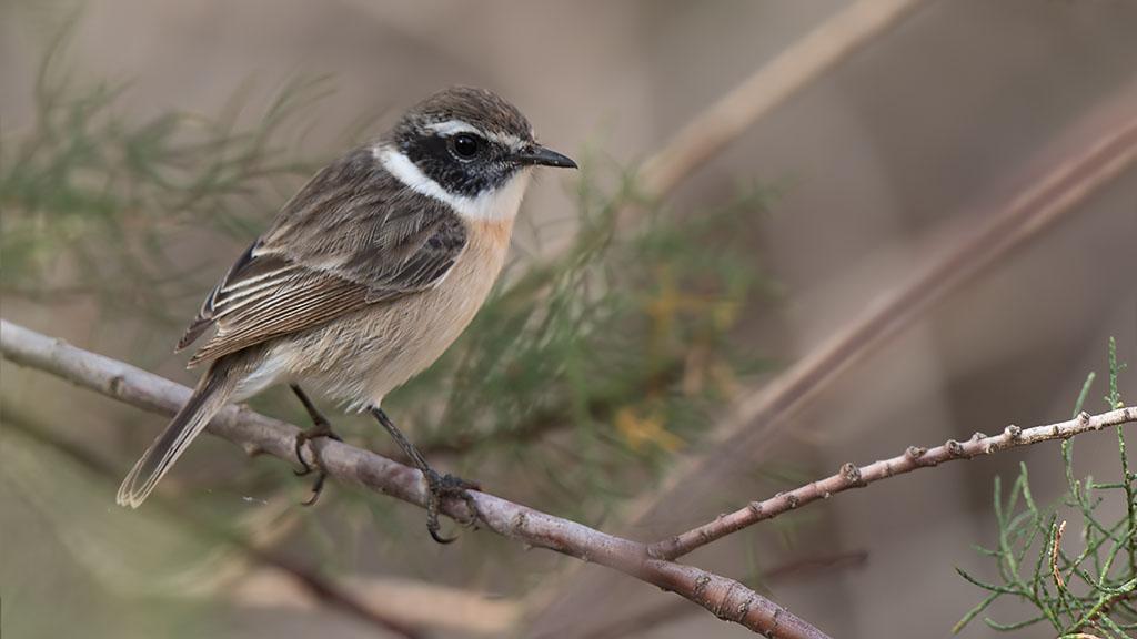 bird island chatrooms Phoenix escorts - the eros guide to phoenix escorts and adult entertainers in arizona.