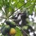 Ceylon-tok-Sri-Lanka-Grey-hornbill-07