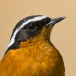 Marokko 2010 – Vogelwacht Uden goes Morocco