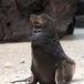 galapagos-zeeleeuw-galapagos-sea-lion-04