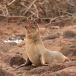 galapagos-zeeleeuw-galapagos-sea-lion-07