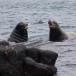 galapagos-zeeleeuw-galapagos-sea-lion-08
