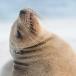 galapagos-zeeleeuw-galapagos-sea-lion-12