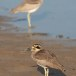 Grote-griel-Great-stone-curlew-04