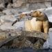 ijsbeer-polar-bear-01