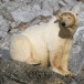 ijsbeer-polar-bear-04