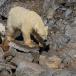ijsbeer-polar-bear-08