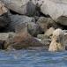 ijsbeer-polar-bear-24