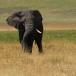 Zuid-Oost Afrika 2006 The big Five