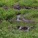 noord-amerikaanse-bever-north-american-beaver-11