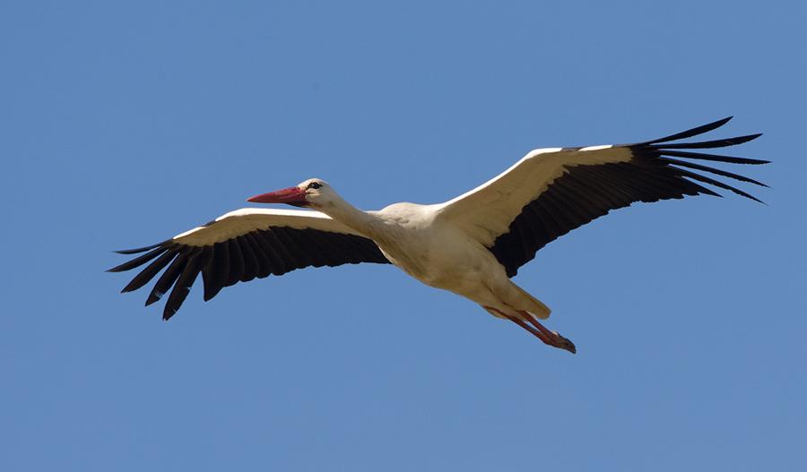 Birdimage