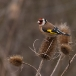 putter-goldfinch-01