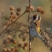 putter-goldfinch-06