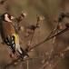 putter-goldfinch-08