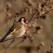 putter-goldfinch-09