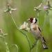 putter-goldfinch-12