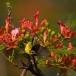 staalborsthoningzuiger-olive-backed-sunbird-01