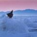 Stelllers zeearend -  Stellers sea eagle 38