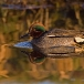 wintertaling-common-teal-05