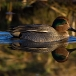 wintertaling-common-teal-06