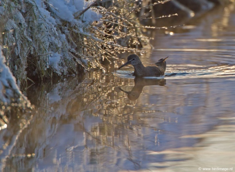 witgat-green-sandpiper-07