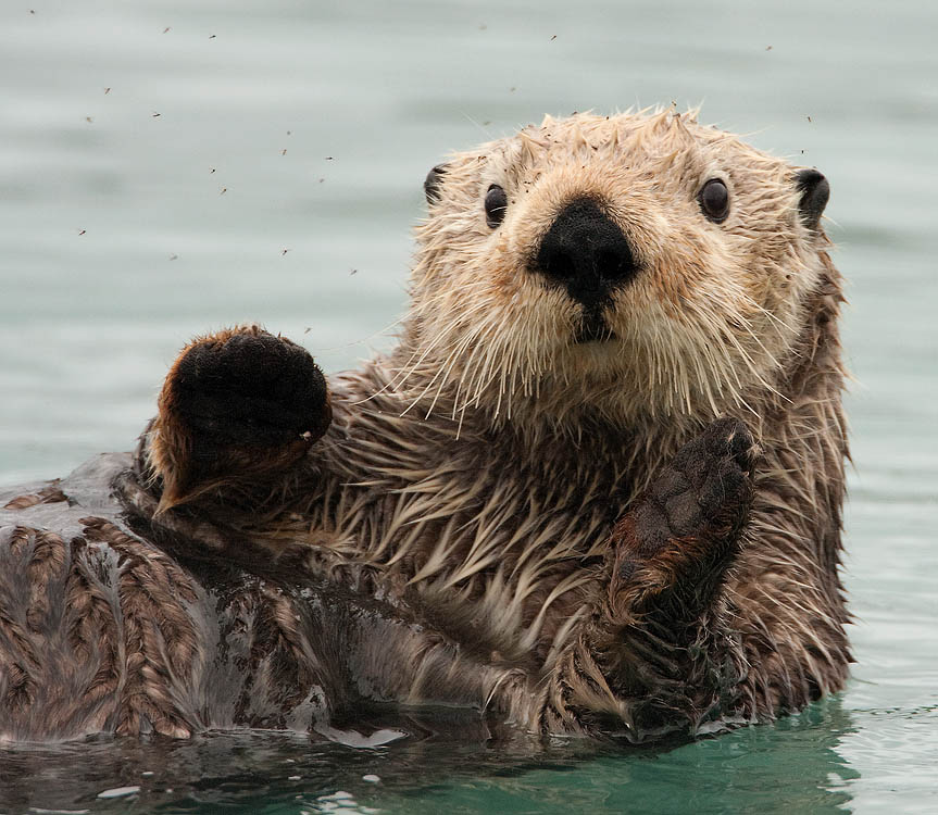 otter rock black dating site Okcupid is the only dating app that knows you're more substance than just a selfie—and it's free download it today to make meaningful connections with real people.
