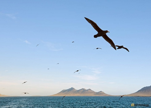 01122016_12_day 3 on ship_Falklands Steeple Jason Island