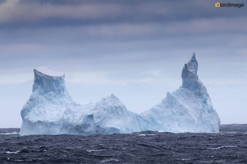 12112016_day 14_to Antarctica_3
