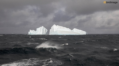 12112016_day 15_to Antarctica_18