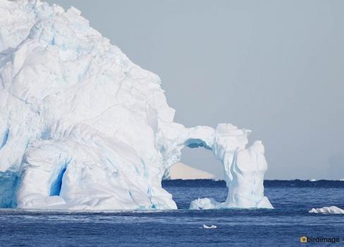 13112016_day 15_Antarctica_10