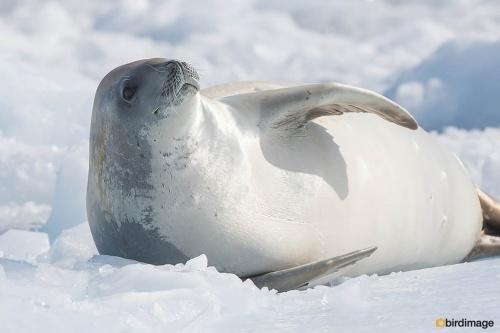 13112016_day 15_Antarctica_34