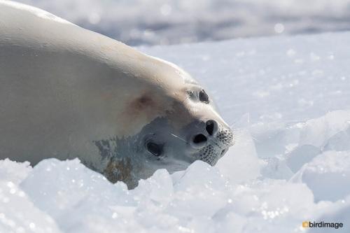 13112016_day 15_Antarctica_35