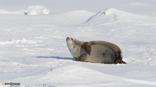 13112016_day 15_Antarctica_49