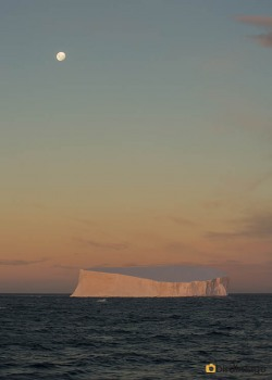 13112016_day 15_Antarctica_54