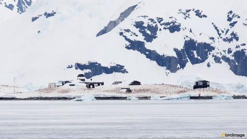 14112016_day 16_Antarctica_36