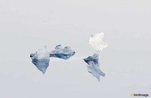 14112016_day 16_Antarctica_38