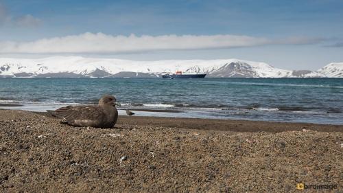 15112016_day 17_Antarctica__Deception Island 7