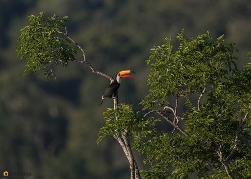 20112016_Iguazu day 1_1